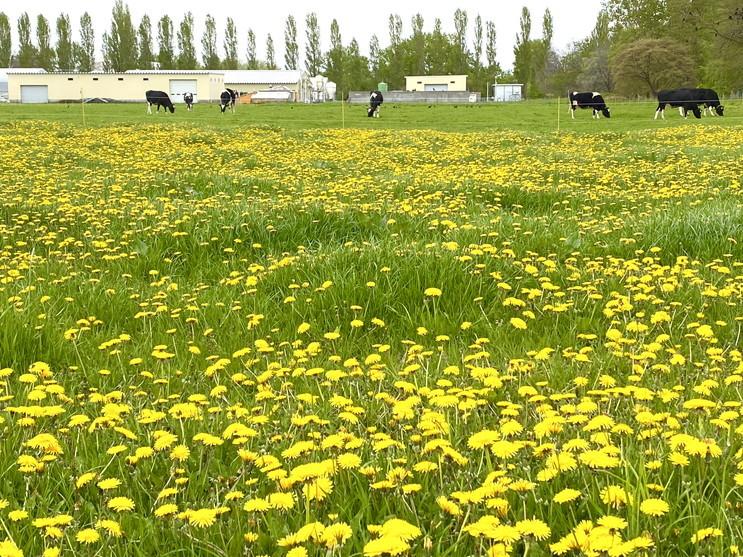 """2020年5月 『コロナに負けるな!花々も応援している』 May 2020 \""""Overcome COVID19! Flowers with Us!\""""_c0219616_19000320.jpg"""
