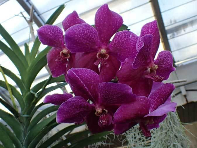 板橋区立熱帯環境植物館~熱帯雨林の植物【後編】_b0355317_12234837.jpg