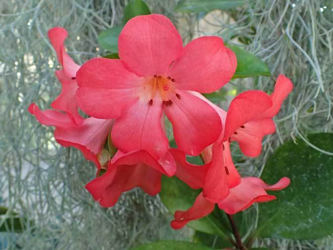 板橋区立熱帯環境植物館~熱帯雨林の植物【後編】_b0355317_12242322.jpg