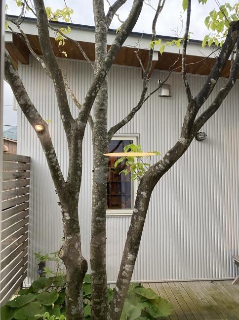 中庭の巣箱_c0153422_20521223.jpeg