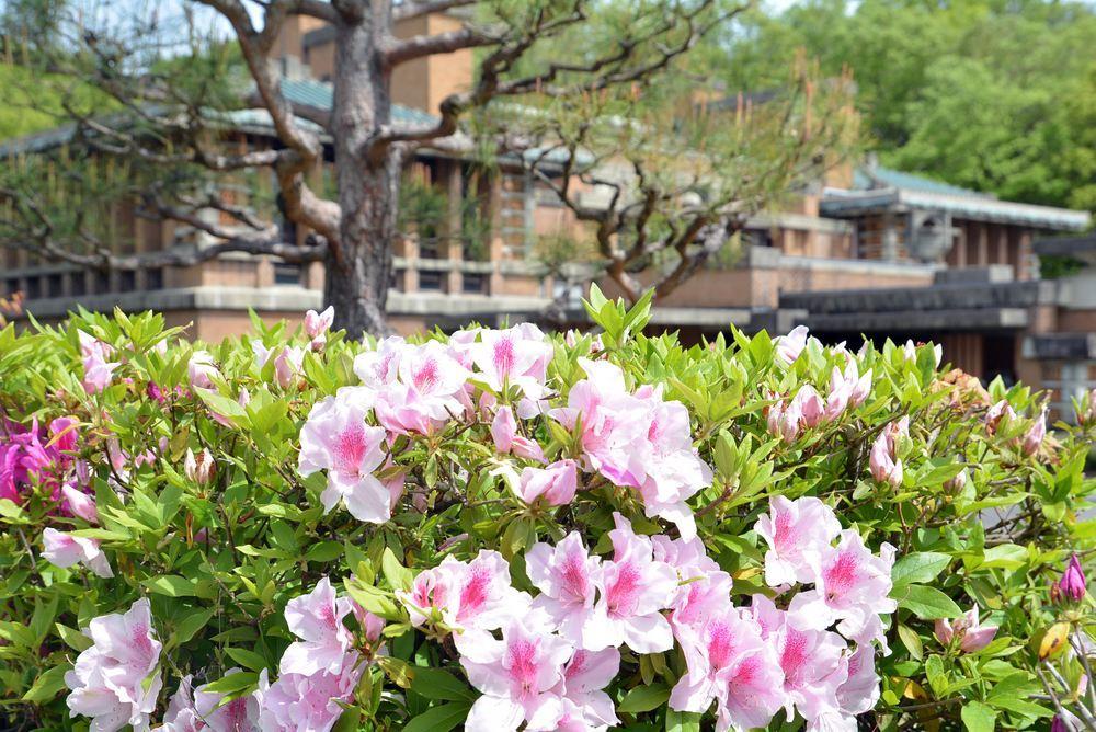 帝国ホテル中央玄関とツツジの花_e0373930_10082969.jpg