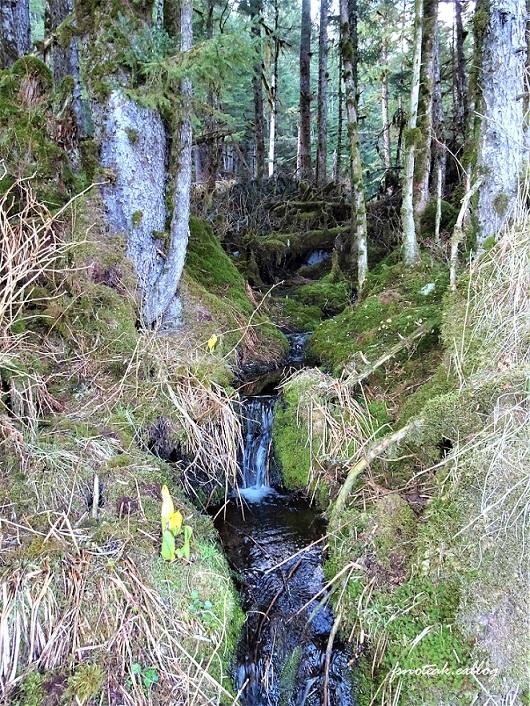湖の北 芽吹き 水の流れ_d0356844_01260651.jpg