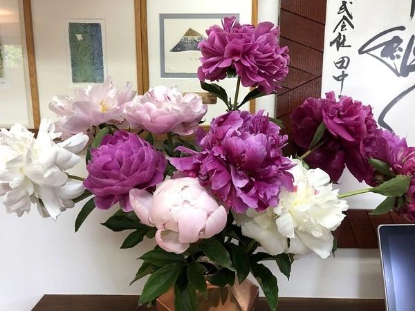 芍薬の花_c0019551_17230431.jpg