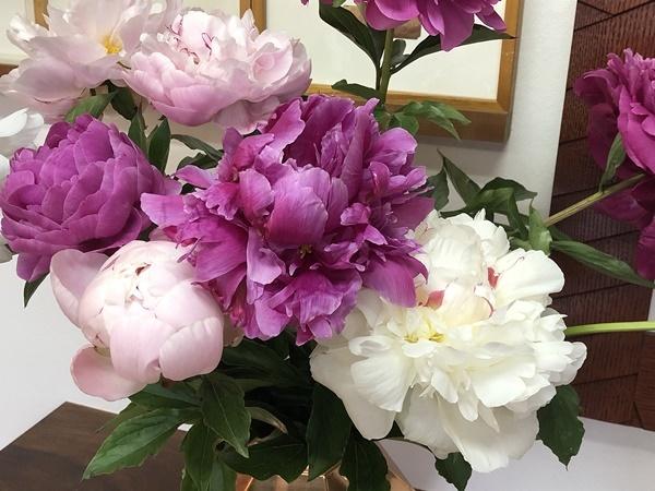 芍薬の花_c0019551_17231862.jpg