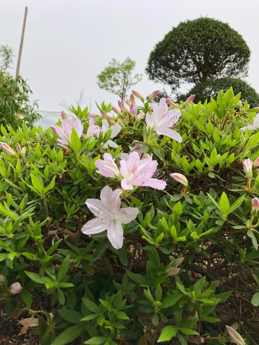 今日のお花たち_b0093660_09350174.jpg