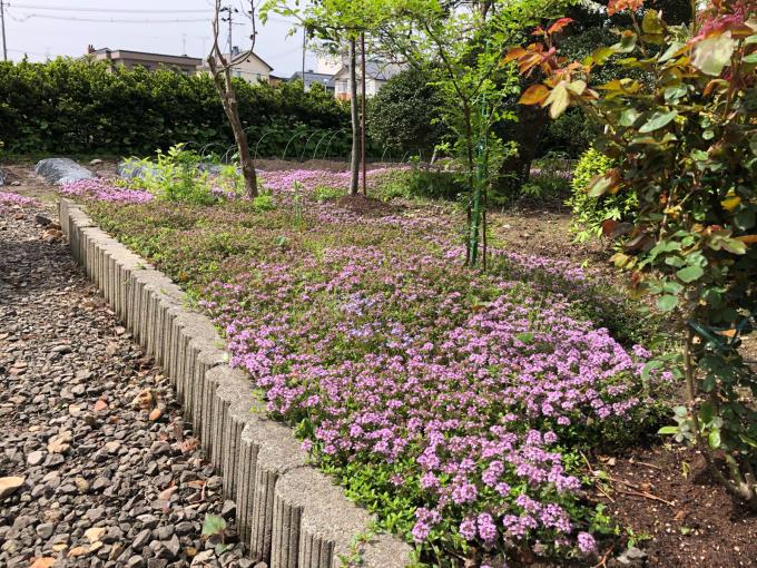 今日のお花たち_b0093660_09351222.jpg