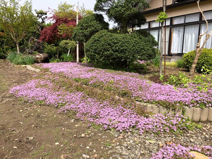 今日のお花たち_b0093660_09421230.jpg