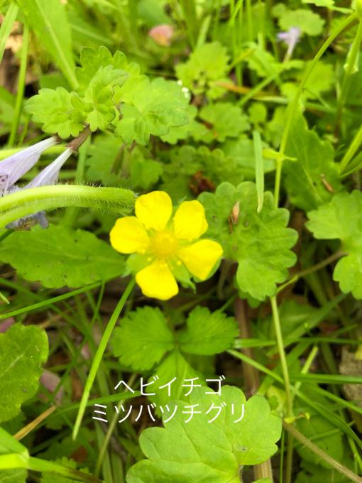 今日のお花たち_b0093660_09580541.jpg