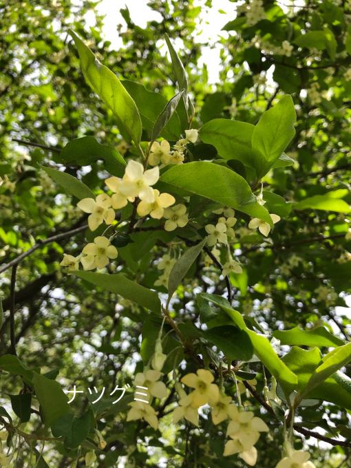 今日のお花たち_b0093660_10030833.jpg