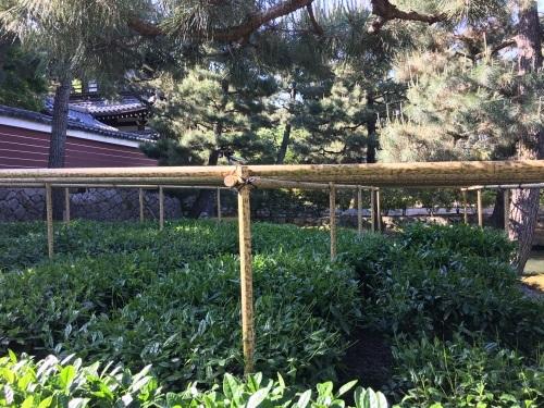 新茶摘み、道具市つまみ食い_b0153663_00495841.jpeg