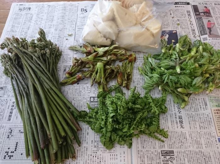 山菜採りしたいです・・・_a0272765_16443002.jpg