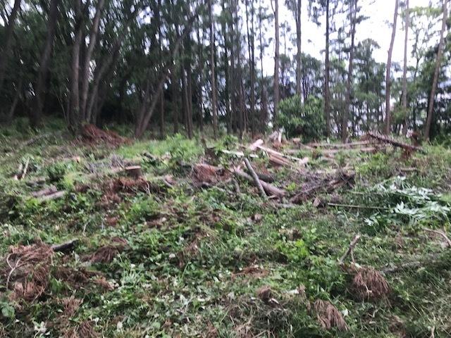 台風で根返りヤマザクラの幹に胴吹き5・15感動シーン(上)_c0014967_11202491.jpg