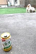 今日もお外でビール♪_d0140668_19474153.jpg
