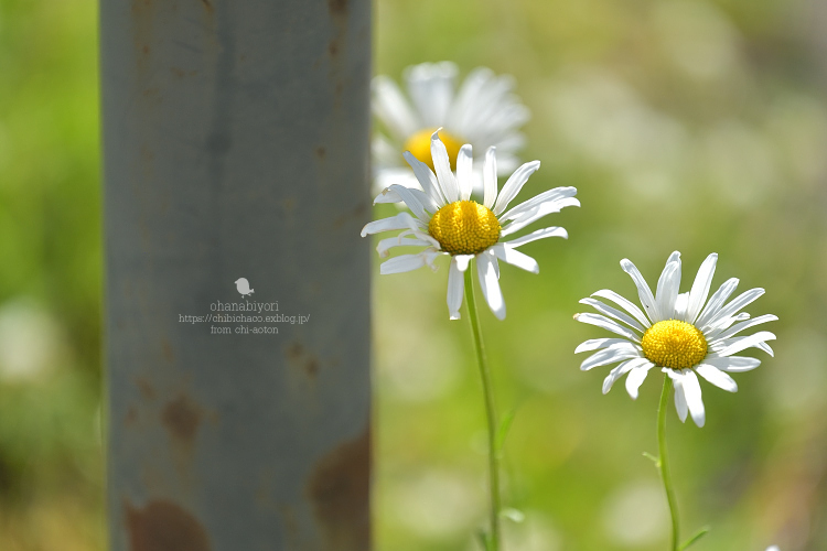 お散歩♪_c0319774_00084519.jpg