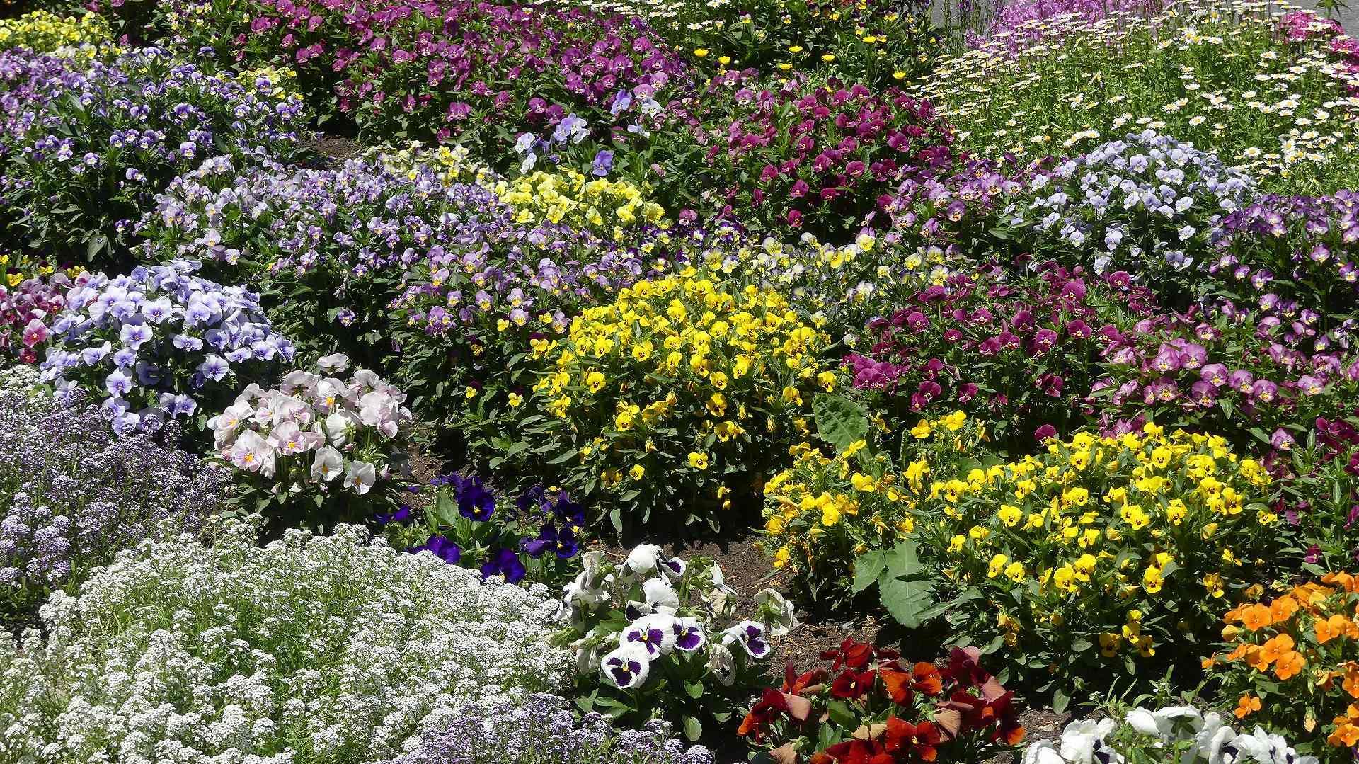 花々しく・・・皐月_a0185081_21263367.jpg