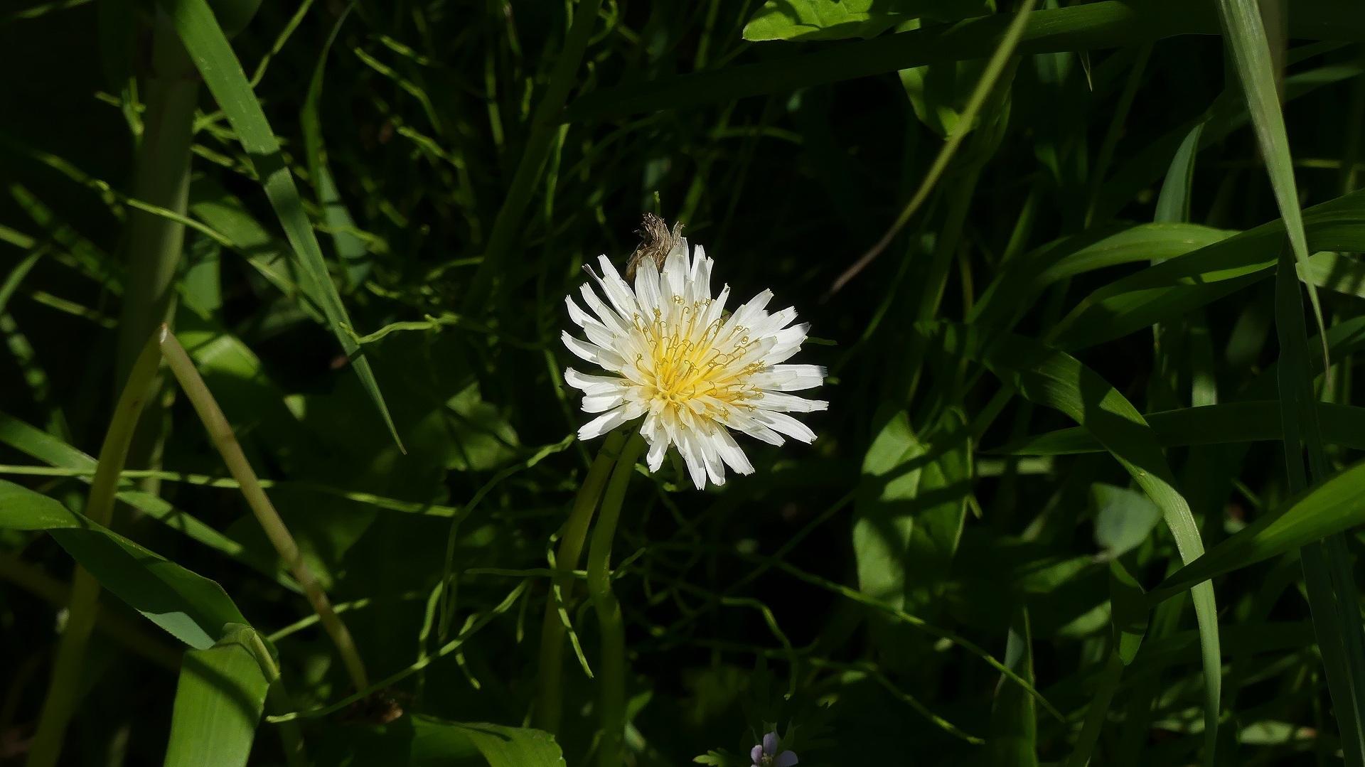花々しく・・・皐月_a0185081_21302880.jpg