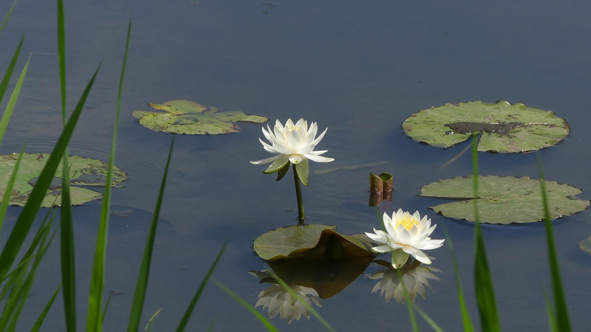花々しく・・・皐月_a0185081_21314521.jpg