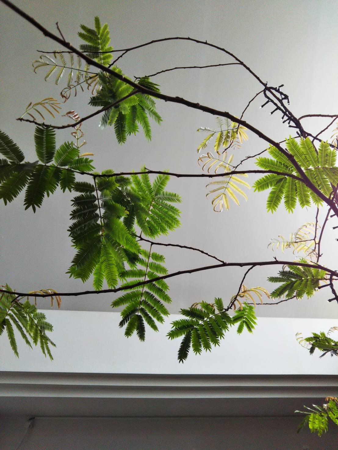 ねむの木 ソーシャルディスタンス kamonamyuオープン日_f0185981_10515445.jpg