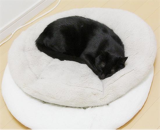 猫の寝方それぞれ_a0389088_05001234.jpg