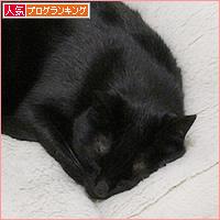 猫の寝方それぞれ_a0389088_05001265.jpg