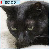 猫の寝方それぞれ_a0389088_05001316.jpg