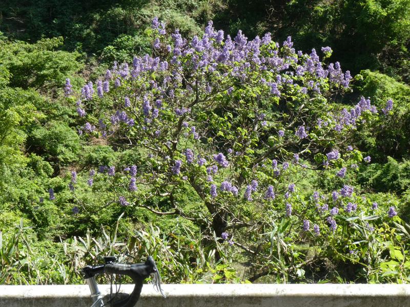 春うらら。。。_d0383596_09073066.jpg