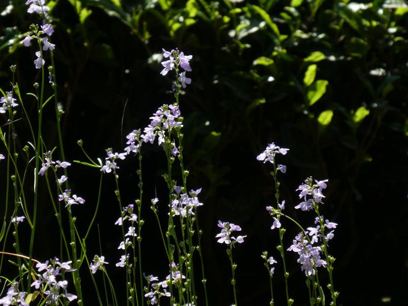 春うらら。。。_d0383596_09073284.jpg