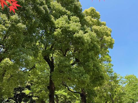 Le ciel blue._f0038600_17265085.jpg