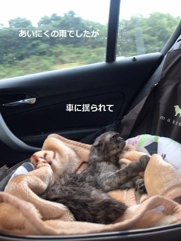 わさびちゃん 新生活スタート!_f0242002_20205472.jpg