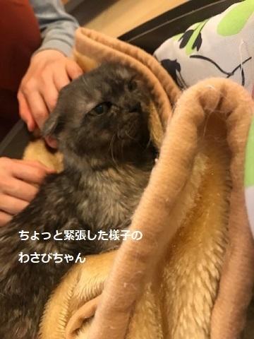 わさびちゃん 新生活スタート!_f0242002_20220374.jpg