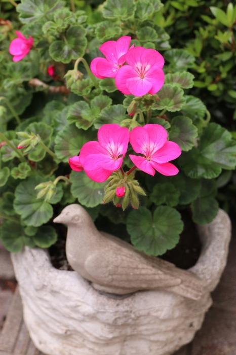 5月 我が家の庭で咲く花々_d0150720_10460027.jpg