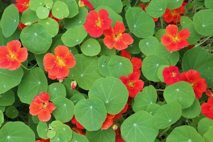 5月 我が家の庭で咲く花々_d0150720_10461827.jpg