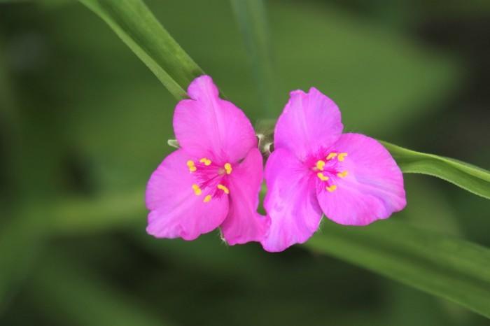 5月 我が家の庭で咲く花々_d0150720_10470876.jpg