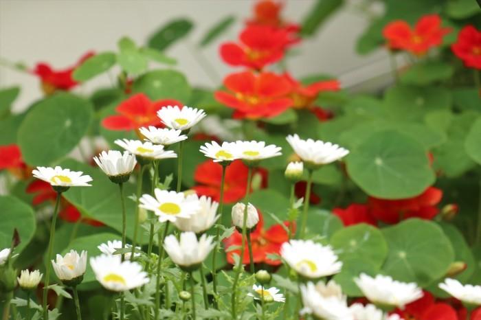 5月 我が家の庭で咲く花々_d0150720_10473908.jpg