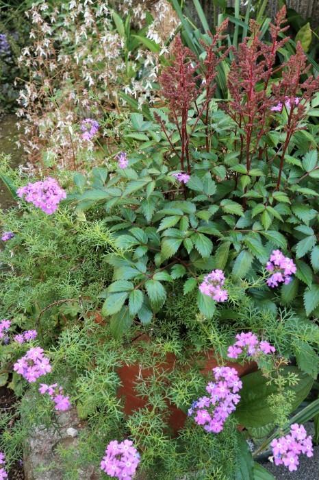 5月 我が家の庭で咲く花々_d0150720_10530804.jpg