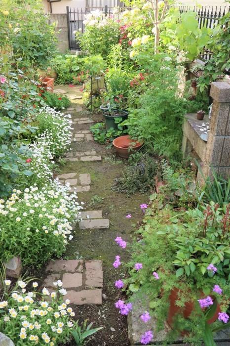 5月 我が家の庭で咲く花々_d0150720_11015737.jpg