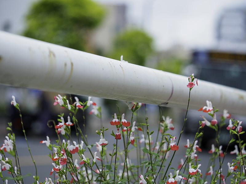 【週末企画5/17  近所に咲いてる花】_a0003650_20192160.jpg