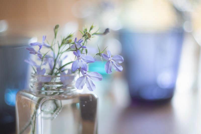 【週末企画5/17  近所に咲いてる花】_a0003650_20223591.jpg