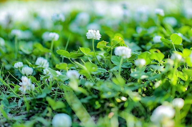 【週末企画5/17  近所に咲いてる花】_a0003650_20231754.jpeg