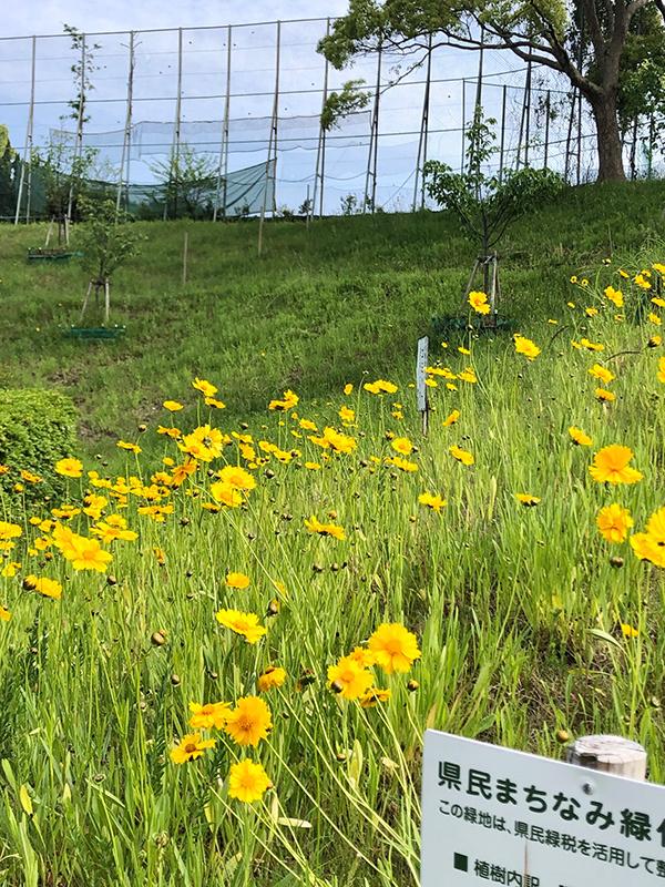【週末企画5/17  近所に咲いてる花】_a0003650_20233551.jpg