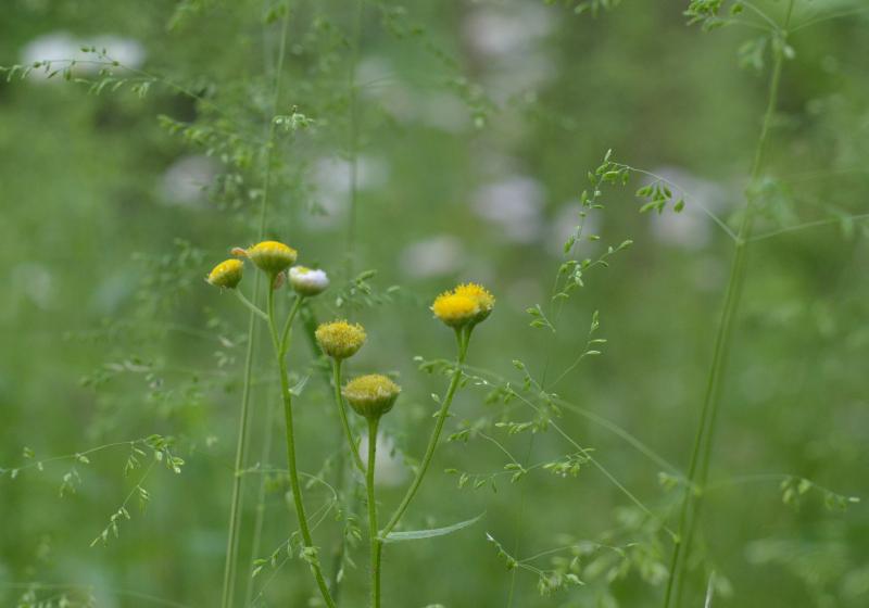 【週末企画5/17  近所に咲いてる花】_a0003650_20235476.jpg