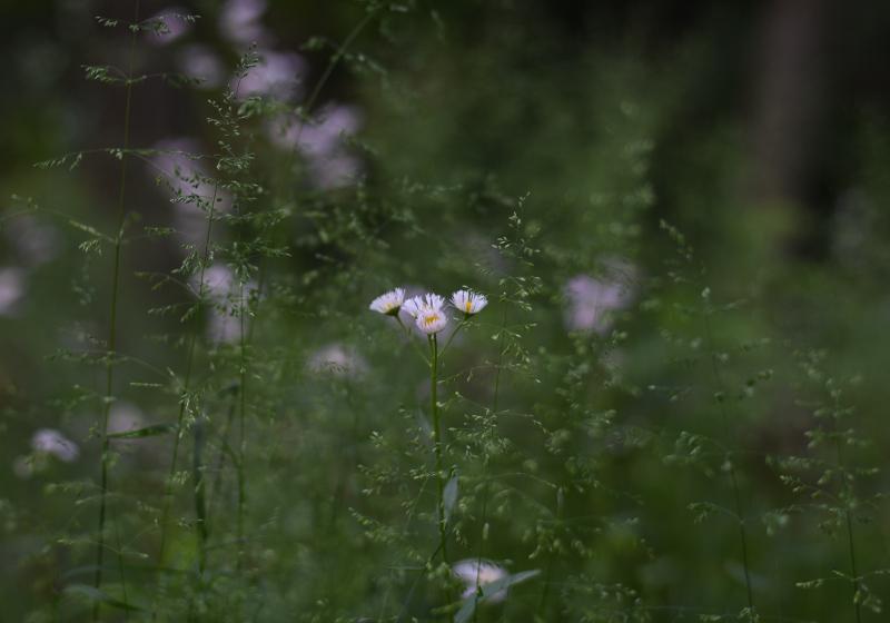 【週末企画5/17  近所に咲いてる花】_a0003650_20241539.jpg