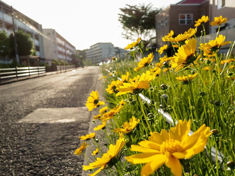 【週末企画5/17  近所に咲いてる花】_a0003650_20245332.jpg