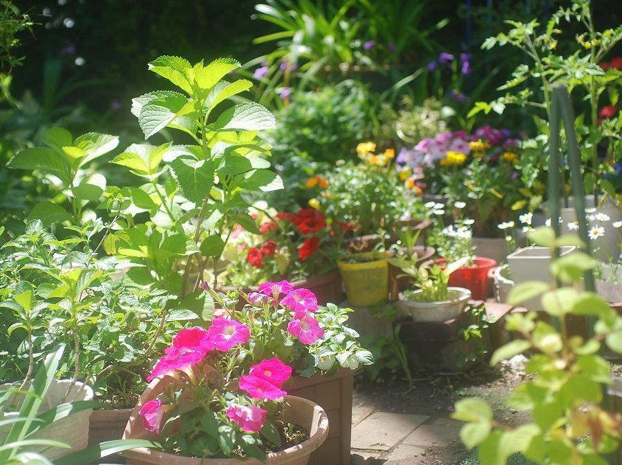 五月の庭の花々_c0187781_14101759.jpg