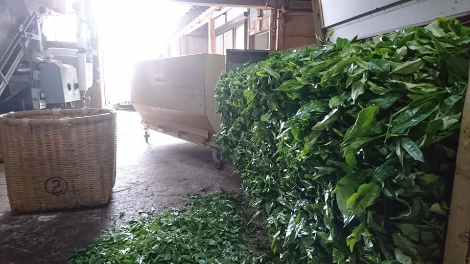 一番茶の収穫が終わりました_b0028299_21515973.jpg