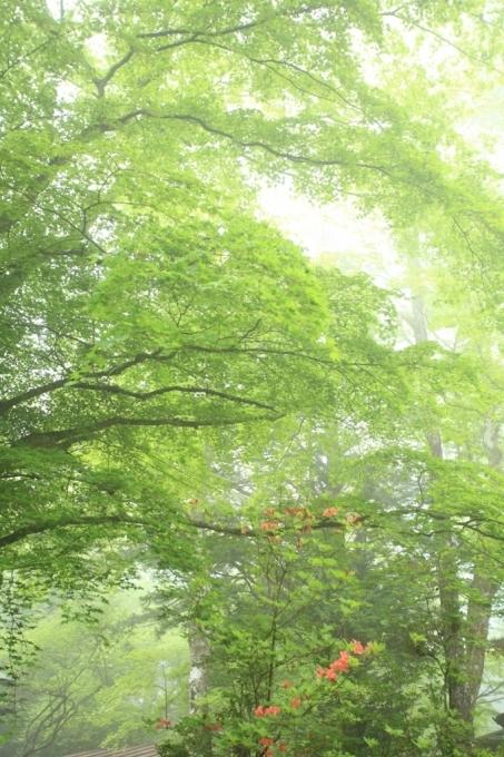 霧の午後_f0091207_22343623.jpg