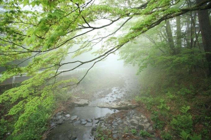 霧の午後_f0091207_22353278.jpg