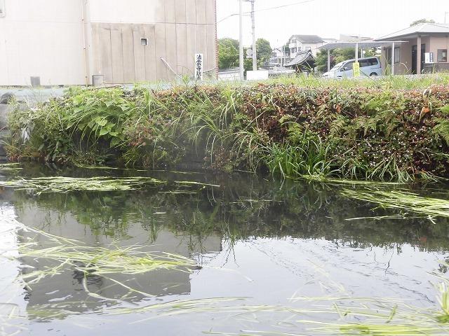 水位がこれまでになく高い田宿川  川そうじでカメラが水没_f0141310_08023989.jpg
