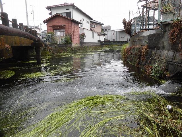 水位がこれまでになく高い田宿川  川そうじでカメラが水没_f0141310_08024713.jpg