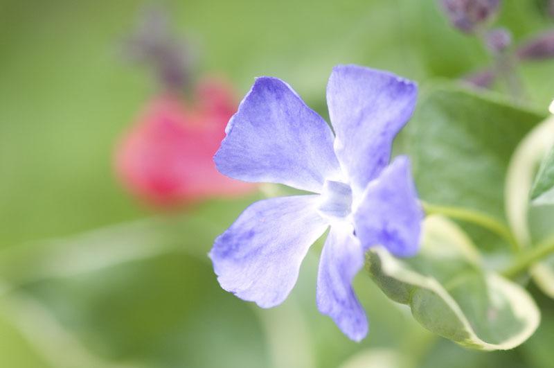 庭の花たち_e0367330_11010204.jpg